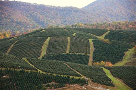 top 28 hill christmas tree farm severts tree farm hill