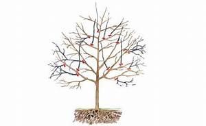 Kirschbaum Richtig Schneiden : obstbaumschnitt gem segarten ~ Frokenaadalensverden.com Haus und Dekorationen