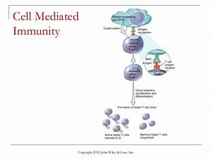 Cell Mediated Immunity Animation images