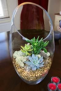 Sukkulenten Im Glas Pflanzen : pflanzen im glas dekorieren ostseesuche com ~ Eleganceandgraceweddings.com Haus und Dekorationen