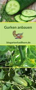 Mini Gurken Pflanzen : wann gurken pflanzen wann gurken ins freiland pflanzen gurken ernten wann ist die beste ~ Buech-reservation.com Haus und Dekorationen
