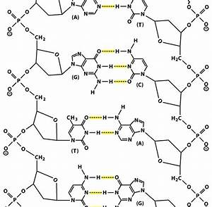Sandwalk  The Chemical Structure Of Double