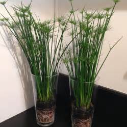 Plantes De Bureau Sans Soleil by Plantes En Pot D Int 233 Rieur Tentez L Originalit 233 Avec
