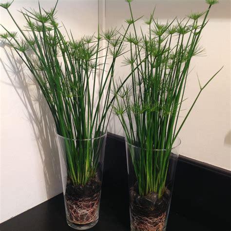 plantes en pot d int 233 rieur tentez l originalit 233 avec fleurodet