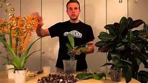 Orchideen Umtopfen Video : alles ber orchideen auf diese art topft ihr eure ~ Watch28wear.com Haus und Dekorationen