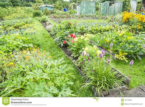 flowers in a vegetable garden stock images image 31472624