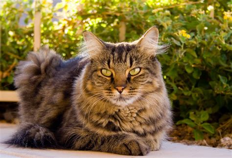 how are cats research says cats have healing powers