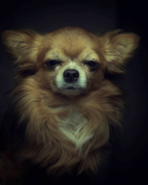 animal face expression photography vincent legrange