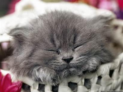Kitty Cats Fanpop Cat Kittens Kitten Sleeping