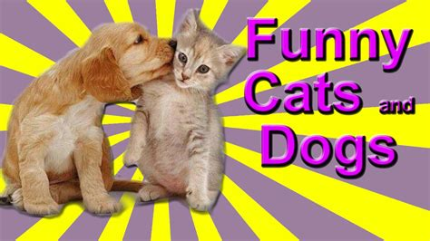 funny cat  dog  kittens annoying dogs dogs