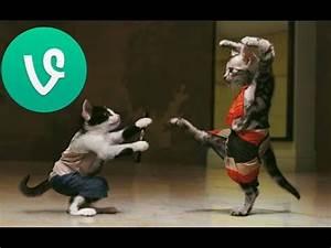 Funny Cats Vide... Funny Videos