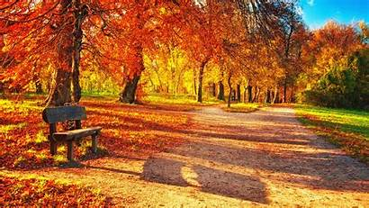 Fall Leaves Wallpapers Colourful Backgrounds Graphic Screensaver