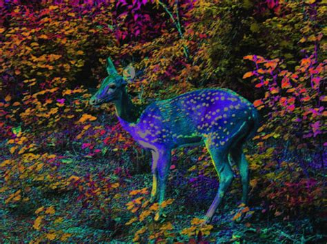 colorful colors dear deer forest image