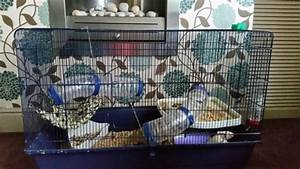 2 female dumbo rats and cage | Rotherham, South Yorkshire ...