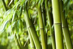 Bambus Im Winter : bambus gie en wann wie oft ~ Frokenaadalensverden.com Haus und Dekorationen