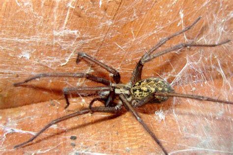 hobo spider pest control  seattle wa whitworth pest