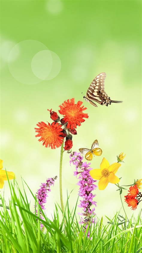 wallpaper spring flowers grass butterfly green