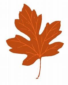 Single Fall Leaves Clipart - ClipartXtras