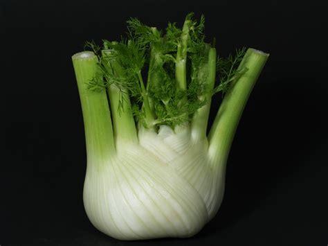Tanaman Sayuran Dan Bumbu Oregano adas sebagai obat sayuran dan bumbu oleh indriati see