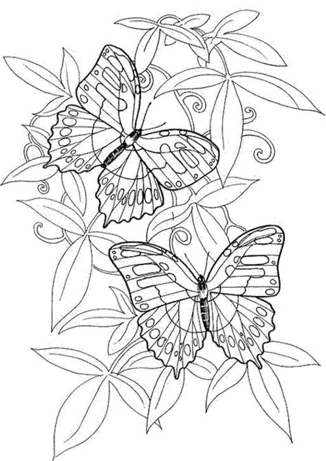 adult coloring pages  butterfly printable ghj