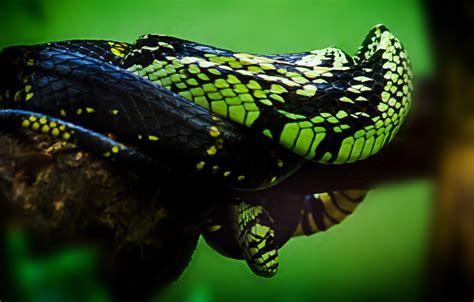 kostenlose foto natur tier tierwelt gruen dschungel
