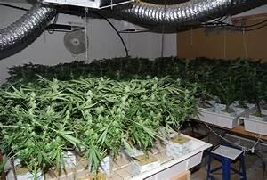 Indoor Grow Anleitung : growing weed top marijuana strains ~ Eleganceandgraceweddings.com Haus und Dekorationen
