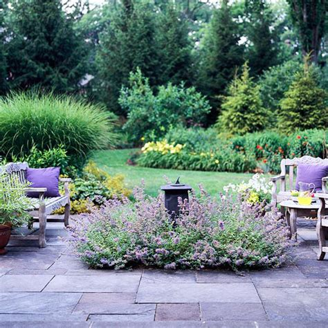 plants for patio borders coppercafe garden transplant lavender