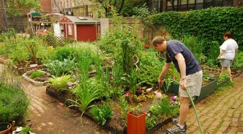 benefits of community gardens benefits of community gardens more than you think
