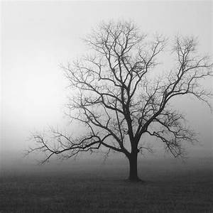 black and white photography, trees, tree, tree photography ...