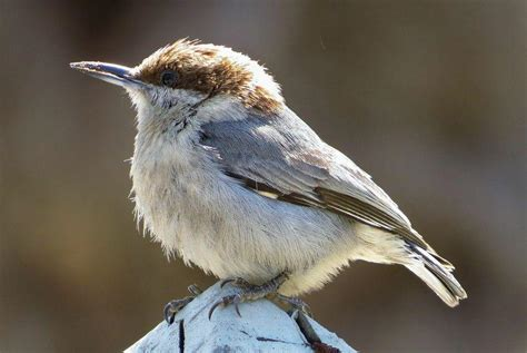 climate change threatens north carolina s birds wunc