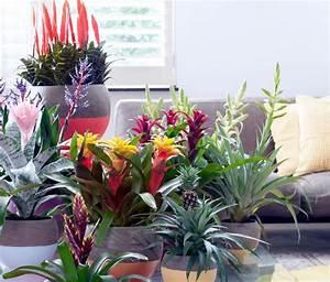 Pflegeleichte Pflanzen Für Die Wohnung : zimmerpflanze des monats die bromelie ~ Michelbontemps.com Haus und Dekorationen