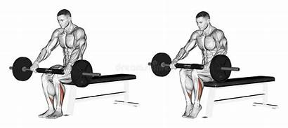 Leg Extension Sitting Exercising Lower Muscles Bar