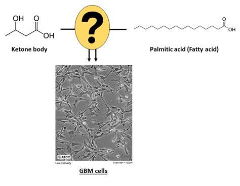 metabolism  fatty acids  ketone bodies