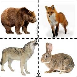 дикие животные загадки в картинках
