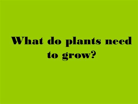 plants powerpoint and interactive activities