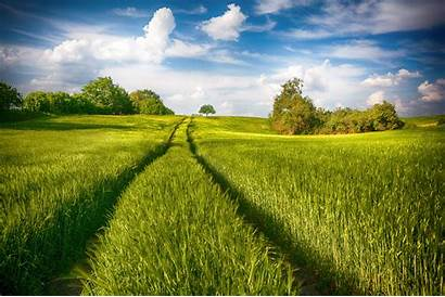 Greenery Nature Summer Field Landscape Background Wallpapers