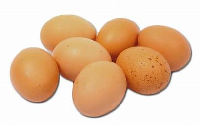 Eggs Egg Cyprus Leading Compromise Grown Without