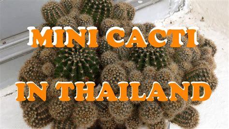 Mini Cacti in Bangkok, Thailand - YouTube