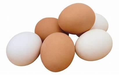 Eggs Facts Benefits Health Egg Nutrition Whatsapp