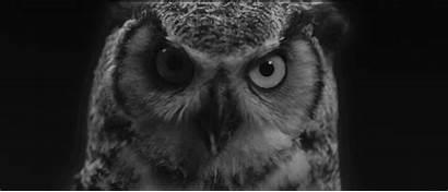 Owl Animal Blanc Noir Woodkid Gifs Hibou