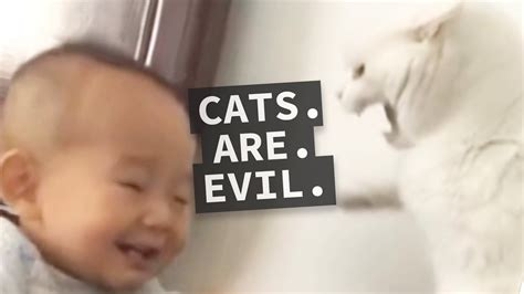 evil cats why trusted