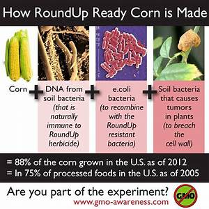 Gmo Food Information That You Will Not Find In Mainstream Media