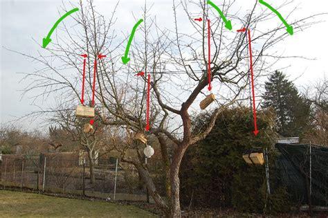 kirschbaum schneiden vorher nachher obstbaumschnitt apfelb 228 ume winterschnitt das reh im garten gartenblog
