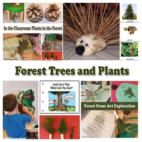 into the forest preschool weekly plan and activities 595 | Forest Trees Plants Activities PreK
