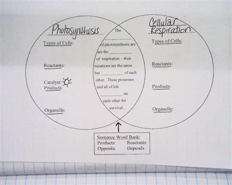 cellular respiration diagram worksheet 100 101 cellular