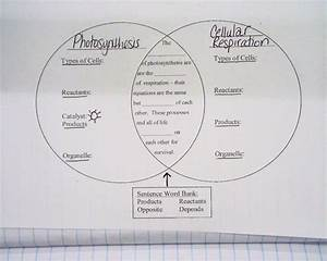 Cellular Respiration Diagram Worksheet