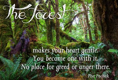 international day  forests  quotes sayings slogans