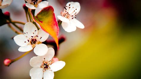 Free download Post Name A Beautiful Flowers HD Wallpapers ...