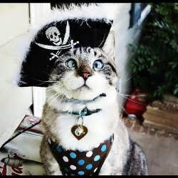 pirate costume for cats 28 costumes for cats that will put a smile on
