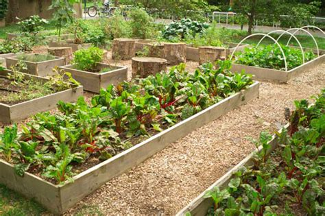 tips on saving big with a small veggie garden coupon chief